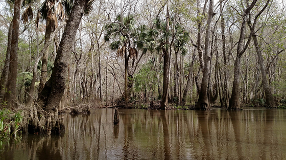 Beautiful Apalachicola River