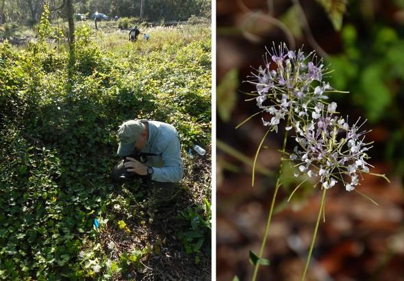 Ridge Ranger takes picture of rare plant