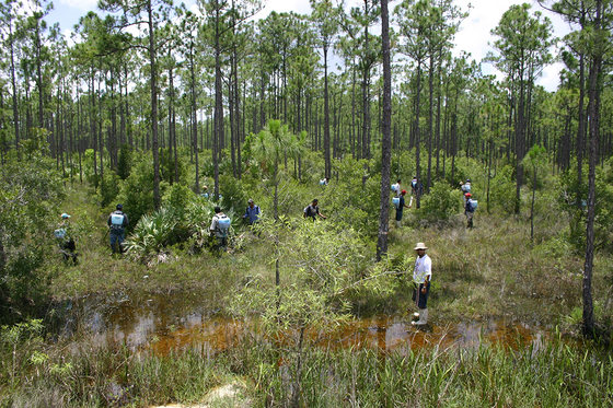 Workers treat invasives at Corbett