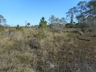 Intruding trees in prairie at APAFR