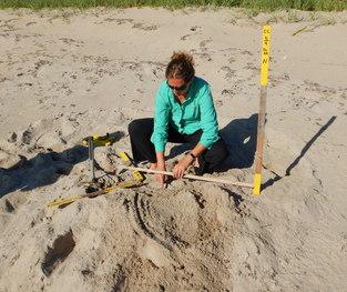 Marking a sea turtle nest
