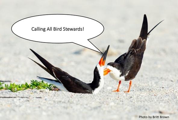 Bird Stewards