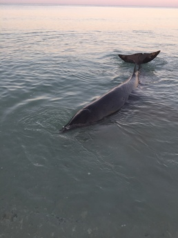 Beaked Whale Stranding on Treasure Island