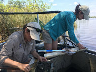 Long-Term Monitoring on the Blackwater River