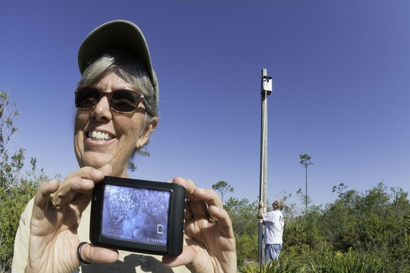 Ridge Ranger holds viewer showing four Kestrel Chicks while another Ridge Ranger inserts a peeper cam in the nest box