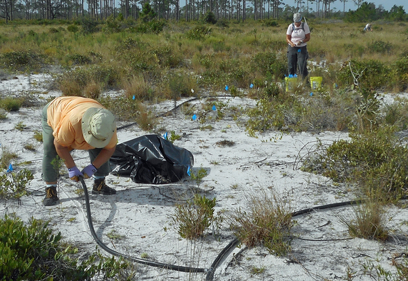 Ridge Rangers remove irrigation system