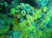 sun_coral