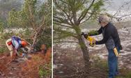 Ridge Rangers Cut Down Sand Pines