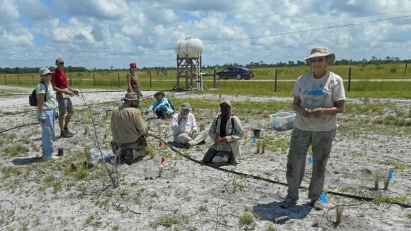 Ridge Rangers plant the east line on August 4
