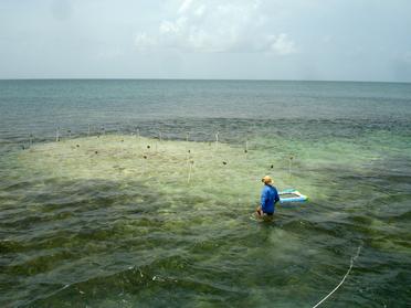 Turtlegrass Monitoring