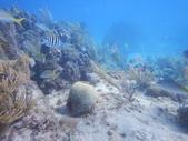 coral_disease