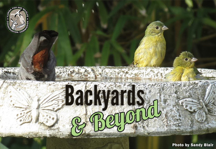 Backyards & Beyond banner image: Three birds in a fountain