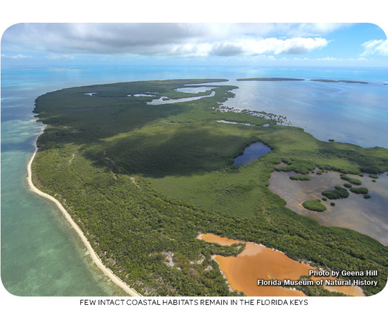 Few intact coastal habitats remain in the Florida Keys
