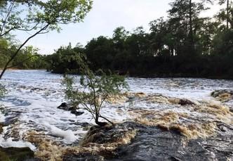 Rapids along the Suwanee River