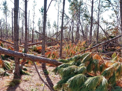 Hurrican Michael Impacts - Forests 2