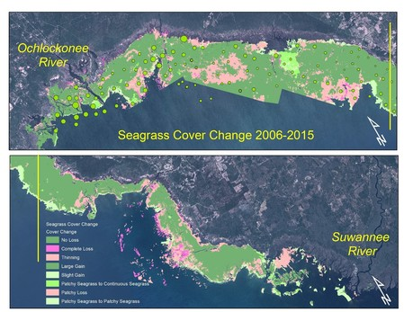 Seagrass Coverage Map