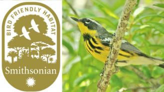 Bird-friendly coffee creates habitat for birds in Central and South America