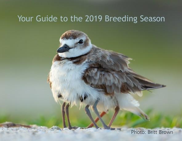 2019 Breeding Season Photo