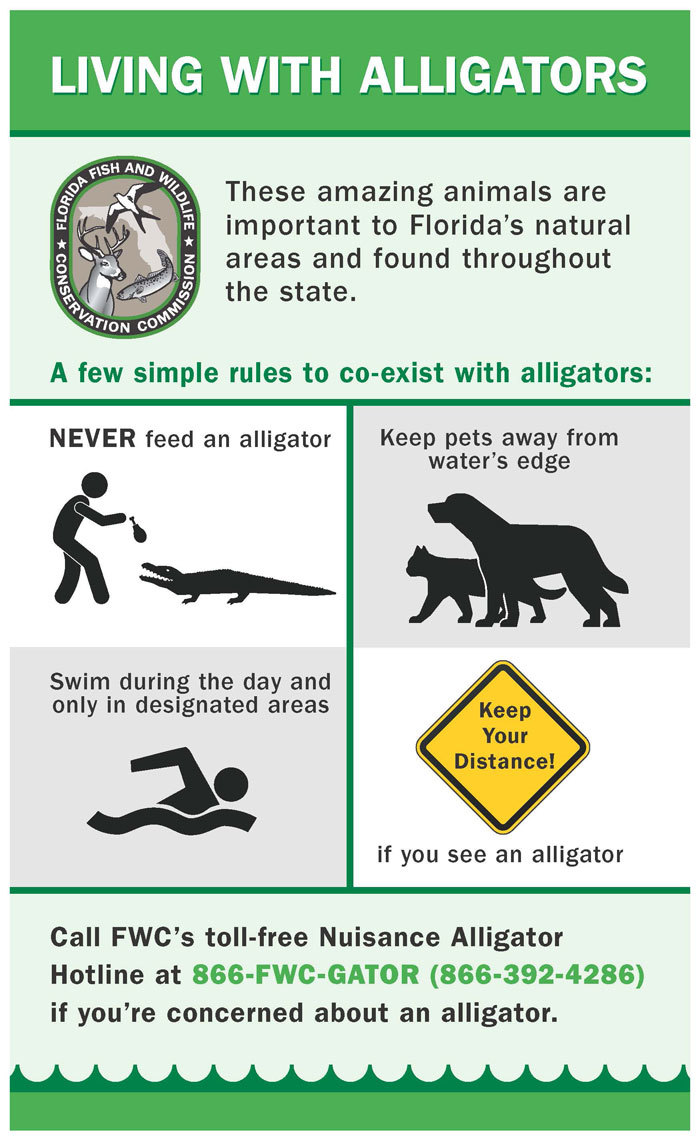 Living with alligators flier