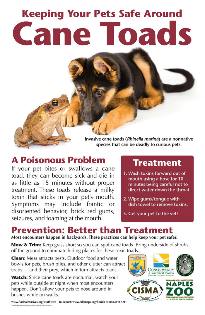 pets and cane toads