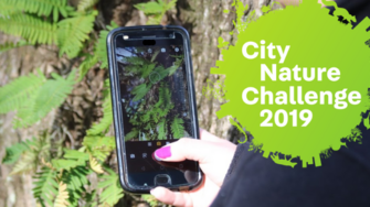 To help your city win the City Nature Challenge, use the iNaturalist app to record your observations.