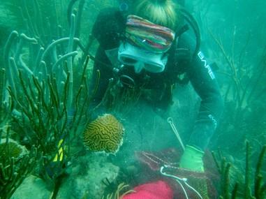 coral_rescue