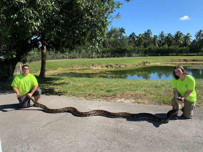 900th python