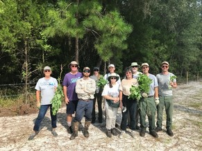 Volunteers display removed showy rattlebox