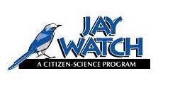 "A scrub jay and the words ""Jay Watch"" make a logo"