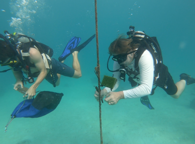 1.Researchers Bill Sharp and Elliot Hart remove and replace larval urchin collectors suspended in the water column near Delta Shoal