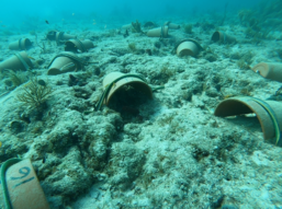Artificial shelter on Delta Shoal awaiting PIT-tagged long-spined urchins