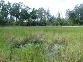 Emphemeral amphibian breeding pond in northwest Florida
