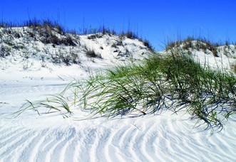 Dunes at Little Talbot Island State Park