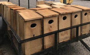 New wood duck boxes