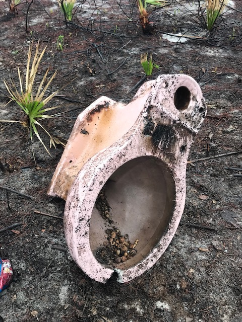 This discarded toilet was full of cracked and whole hickory nuts and acorns