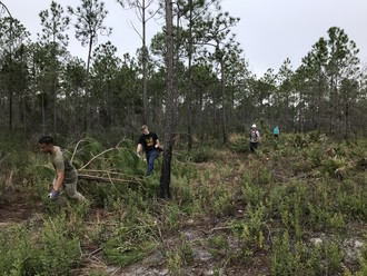 Volunteers help to remove trees from the area during the habitat restoration workday. Photo by FWC staff.