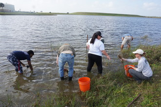 Volunteers and staff harvesting pondweed from a pond in Hendry County. Photo by FWC staff.
