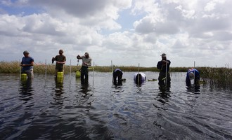 We used poles to mark the start of a planting transect and walked backwards until our floaties filled with pondweed were empty. Photo by FWC staff.