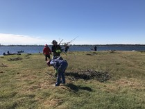 Volunteers help to spread the nesting materials across the small island. Photo by FWC staff.