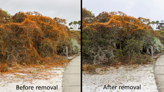 What a difference of before and after the volunteer workday! Photo by FWC and PBC ERM.