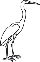 Little Blue Heron