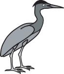 Green-Backed Heron