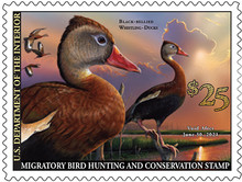 2020-2021 Federal Duck Stamp