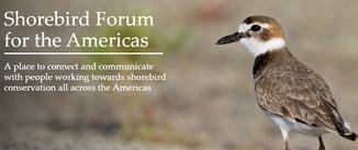 shorebird forum photo