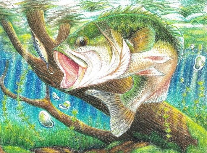 bass drawing