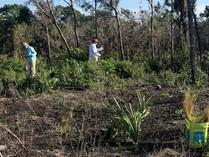 Ridge Rangers planting wiregrass