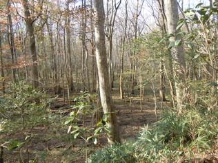 Woods scenic