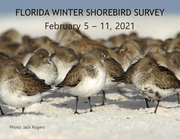 Winter Shorebird Survey Save-the-date