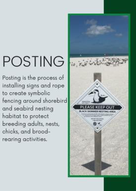 Posting Definition