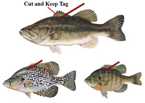 Lake Apopka Fish Tag Challenge